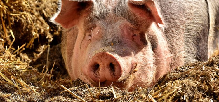 Greed and Feeding the Pigs